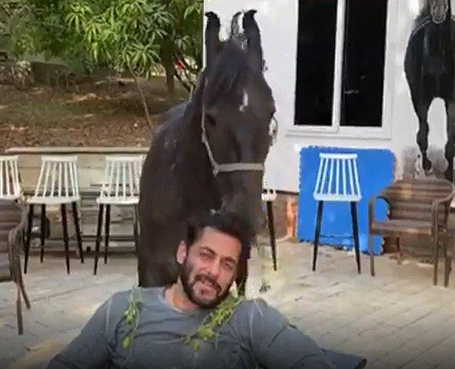 Salman Khan Farmhouse wiki