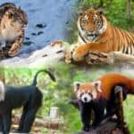 endangered animal species in india
