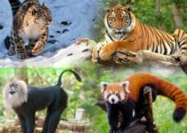 12 Most Endangered Animal Species in India